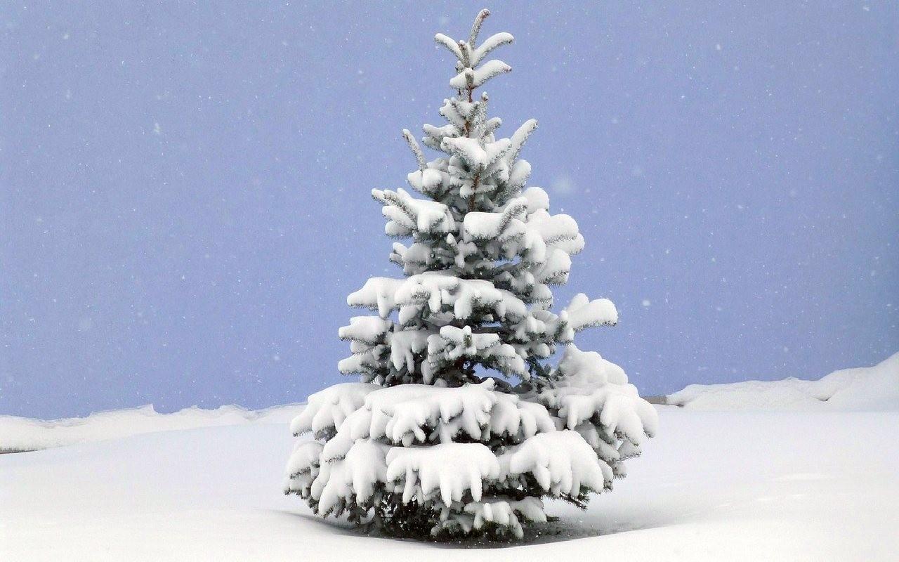 wei e weihnachten diese gebiete garantieren schnee zu. Black Bedroom Furniture Sets. Home Design Ideas