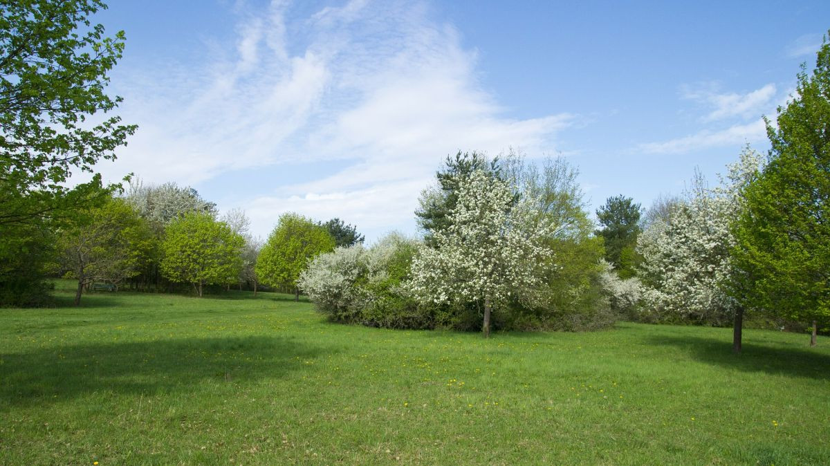Bäume Frühling
