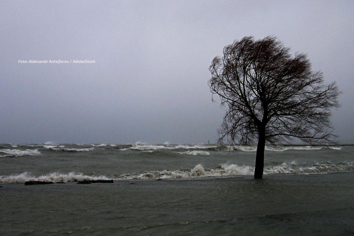 Sturm Hamburg